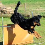 Amanda springt über eine Hürde
