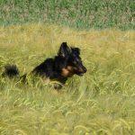 Amanda springend Gras