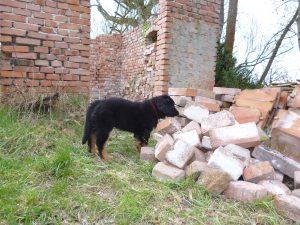 Arabella vor einem Steinhaufen