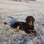 Arabella liegt in einer Winterwiese