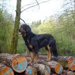 Arabella auf einem Holzstoß