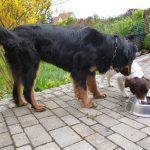 Arabella spielt mit einem Hund