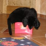 Arabella im Schuhkarton 2