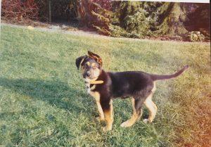 Hund Sheila spielt im Garten