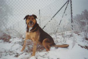Hund Sheila sitzt im Schnee