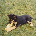 Hund Sheila spielt und beisst in eine Frisbee