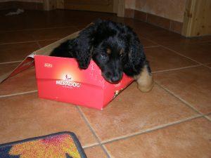 Arabella im Schuhkarton