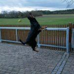 Galerie Bella spielt im Hof mit einem Ball und Springt vor hoch